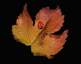 Yellow Sycamore Leaf & Ladybird Brooch