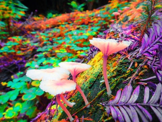 Nature Photography 8x10 Trippy Neon Mushroom