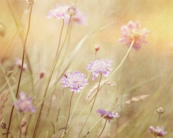 Nature Photography, Wild flowers, Meadow, Summer, Sunny, Fine Art print.