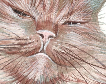 My funny cat Dali