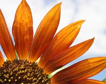 Brilliant Sunflower on Canvas