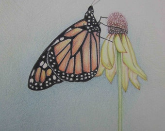 Pencil Art Work Orange Butterfly Hugging A Yellow Flower Original Drawing-Print