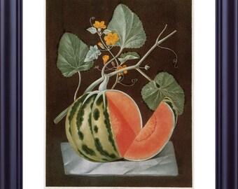 BOTANICAL Print 11x14 Large Vintage Kitchen Art Fruits Watermelon Polignac Melon BROOKSHAW 1812 Brown Background Red Green LP0005