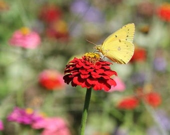 Colorful Art, Butterfly Art, Color Photography, nature photo, summer photography, nature decor, colorful wall decor-  A Colorful World