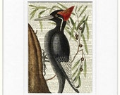woodpecker II dictionary page print