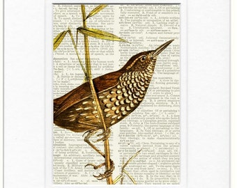 Stream-creeper bird print