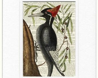 woodpecker II dictionary page print