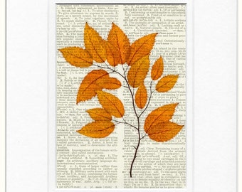 autumn branch photo