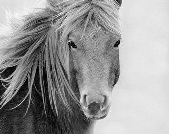 Wild Horse 5x7 Black & White Matted Wildlife Photography, Animal Photography, Chincoteague Pony, Assateague Island,Equine Art, 8x10 Mat
