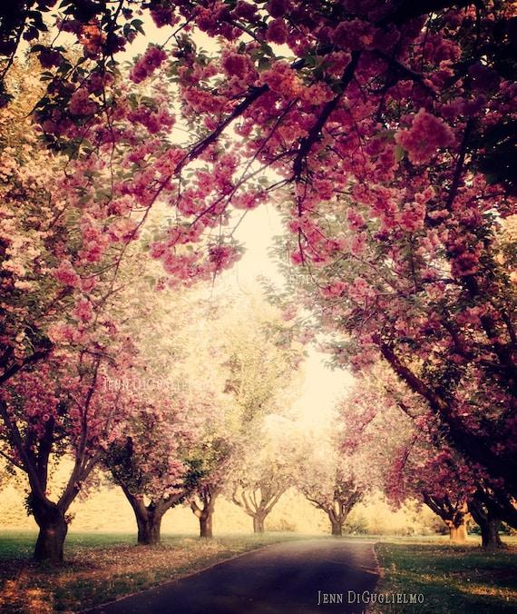 Cherry Blossom Tree Grove Fine art photography print pink