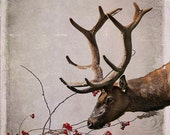 Wildlife Photography Elk -8x10 Print -Digital Art -Colorado Fine Art Photography -Autumn Art -Gifts for Men -Masculine Decor