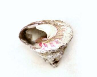 Ice Cream Shell Minimal Art Print Beach House Decor Seashell