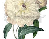 French Watercolor Peony Clipart: High Resolution Printable Artwork, - Image No. R50 Instant Download