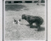 1950s Dog and Kitten Face Off - snapshot 710
