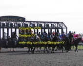 And They re Off - Breaking Out of the Keeneland Starting Gate - 8 x 10 Photograph