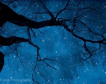 Nature Photography, Surreal Starry Dark Blue, Nature Landscape Photos, Blue Haunting Spooky Trees, Fantasy Dark Blue Nature Stars Night Sky