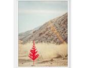 Palm Springs 2 (Red Tree) // 8x10 Fine Art Giclée Print // Photography