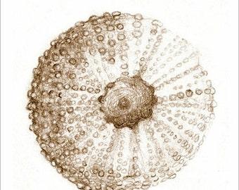 """ART drawing Sea Urchin beach, sea, shells """"Notes From a Walk on the Beach"""" print from original art, ocean  art, beach art"""