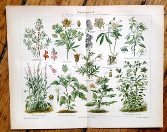 1894 POISONOUS PLANTS original antique botanical print LITHOGRAPH