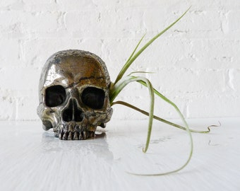 10% SALE - Goonie Gold Skull - Pyrite Carved Crystal Life Size Air Plant Garden - Spring Decor