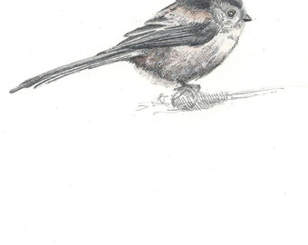 A5 Print - Long Tailed Tit - Pencil Drawing