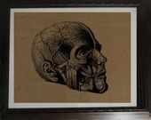 Medical Anatomy Human Skull Screen Printed Burlap for Decor Wall Frame 10 x 14