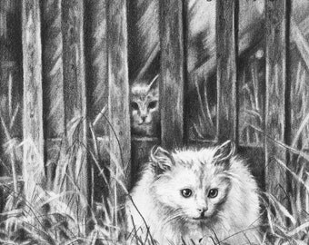 WHITE Cat, Framed Original Drawing, Cat, Black and White, Kitten, Domestic Cat, Special Gift, Framed Pencil Drawing
