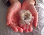 Love birds-birds nest- tiny-Textile art bird nest- ooak made to order