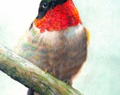 ACEO ATC size print , color pencil drawing, hummingbird art  print by John DelMastro, 2.5 by 3.5