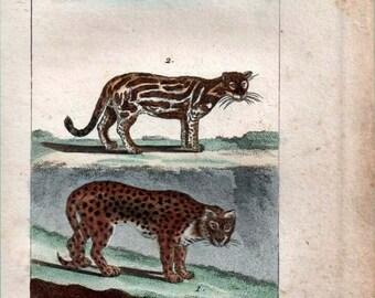 1802 Antique Print Jaguar and Ocelot Hand Colored Engraving  Buffon Natural History