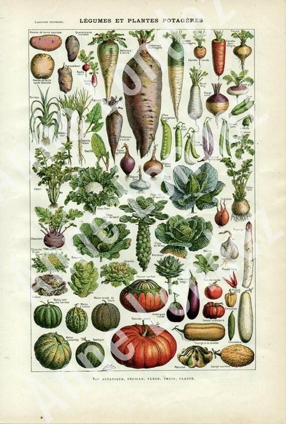 Kitchen Wall Decor Vegetables : Vintage kitchen decor vegetable poster french