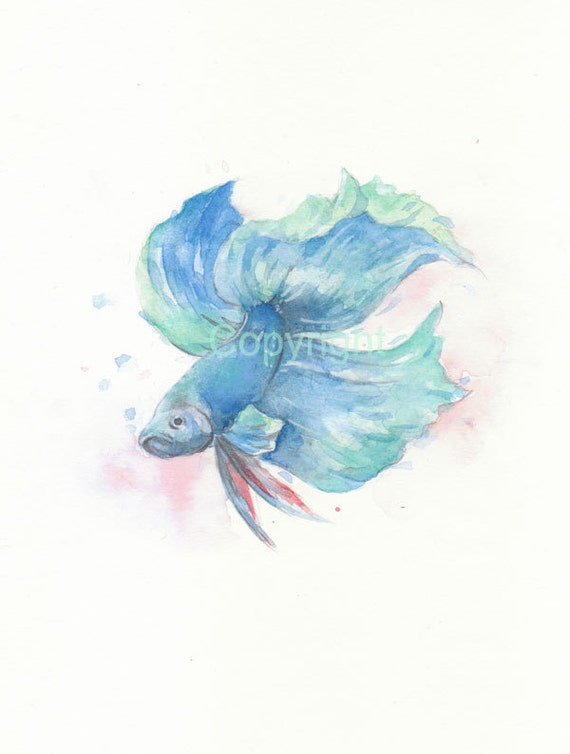 Fish fish print fish art betta watercolor giclee for Betta fish painting