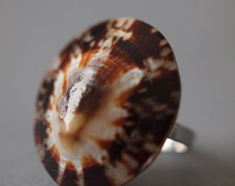 Walnut Ring