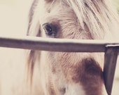 I want a pony 16x20 - color - home decor - neutral vintage tones - farm animals - kids room decor - fine art photography