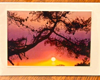 Sunset photo card, Sunset notecard, Sunset Through the Pines