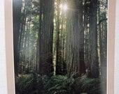 Redwood Forest Poster - Vintage Calendar Page - California National Park