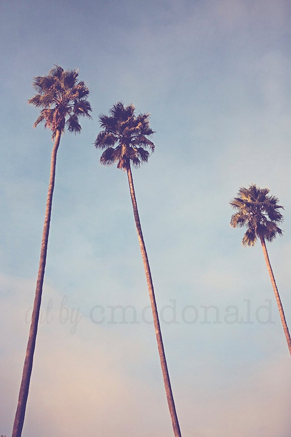 Sunshine & Warmth - Photographic Print - Palm Tree, Los Angeles, California, SoCal, Cali, Whimsical, Photograph, Wall, Art, Hanging,