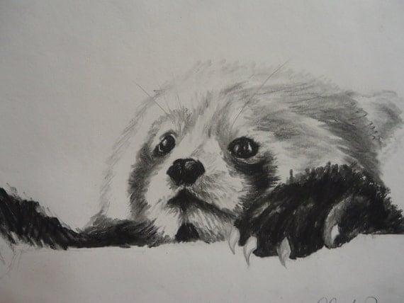 Items similar to Red Panda Sketch drawing Free Shipping Eco