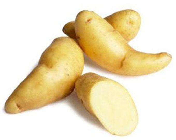 Russian Banana Fingerling Seed Potato Certified Organic 1 Pound Gourmet  - Spring Shipping Non-GMO