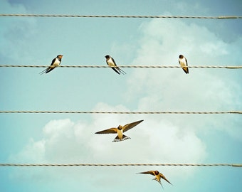 Nature Photography, Swallows, Summer, Birds on wires, Flying, Blue Sky, Wall Art.