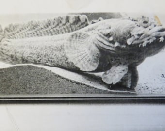 Vintage 1930's Ugliest Fish I've Ever Seen Snapshot Photo - Free Shipping