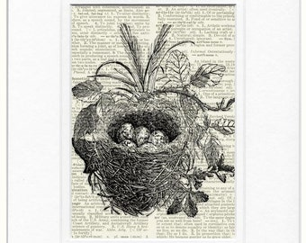 bird nest no. 13 print