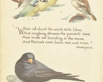 Bird Print - Wren - Finch - Vintage Bird Book Plate Print - Snow Birds - Country Diary of Edwardian Lady - Edith Holden - Shakespeare - 1906