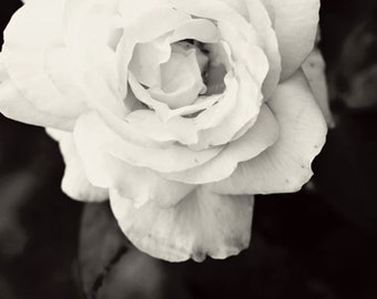 Black and white Photography monochromatic nature macro Spring Rose romantic home decor for her women dark flower wedding under 50 - Fine Art