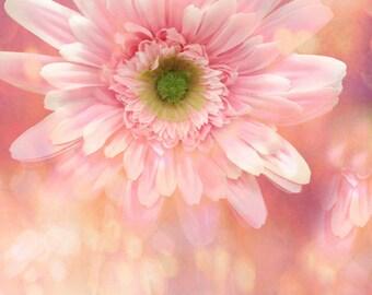 Daisy Flower Photography, Gerber Daisy, Dreamy Daisy Wall Art Prints, Shabby Chic Pink Daisy Flowers, Romantic Pink Daisy Floral Photo Print