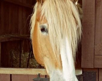 Equine Photography, 5x7 Print, Nursery Decor, Horse Photography, Animal Photography, Farm, Animal Portrait, Nature Photography, Portrait