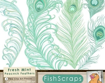 Pics For > Peacock Feather Clip Art