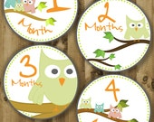 Owl Family - Monthly Baby Printable Stickers / Labels - Digital PDF