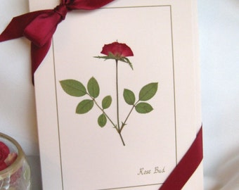 Pressed Flower Cards, Roses on blank pink greeting cards, Romantic Unique Card Set Gift For Her on Valentine's Day, Birthday Cards, any day