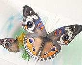 3D Buckeye Butterfly Pop up Card Any occasion Card